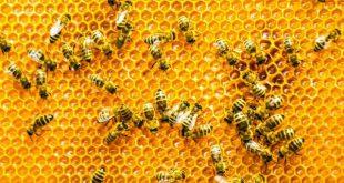 عسل در رژیم گیاهی
