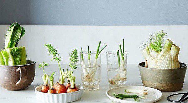 پرورش دوباره گیاهان