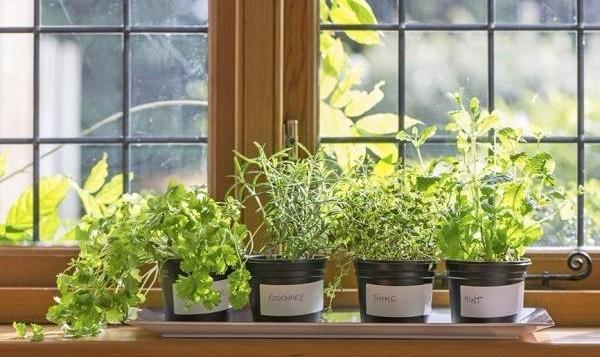 پرورش سبزیجات تازه