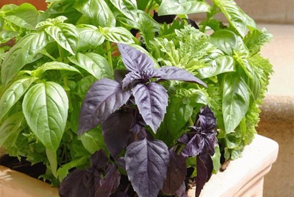 پرورش سبزیجات تازه در خانه